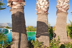 Three palms. Royalty Free Stock Photo