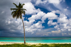Three palms on the beach island Stock Photography