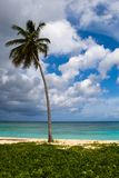 Three palms on the beach island Stock Images