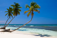 Three palms on the beach island Stock Photo