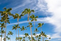 Three palms on the beach island Stock Image
