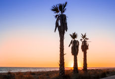 Three palms on the beach in sunset. And blue sky Stock Photos