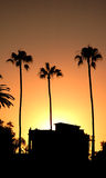 Three palms and a beachhouse at sunset Royalty Free Stock Photo