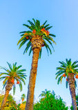 Three Palms Stock Photography