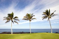 Three Palms at Kona Beach, HI Royalty Free Stock Photo