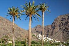 Three palms and little village of la Calera in Valle Gran Rey, La Gomera stock photos