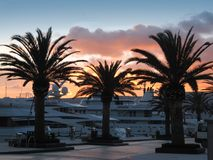 Three palms in the luxury marina. The palm trees in luxury marina Port of Montenegro. Luxury yachts and orange sky in the background Stock Photos