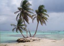 Three Palms. Three palm trees on the coast of the Mediterranean Sea near the city of Mahdi in Tunisia Stock Photo