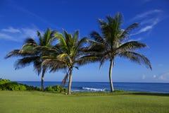 Three Palms Stock Image
