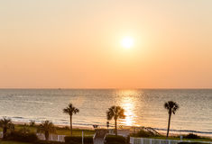 Three Palms at Sunrise Royalty Free Stock Photography