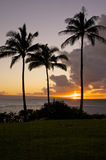 Three palms at sunset Stock Image