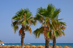 Three Palmtrees at the beach Royalty Free Stock Images