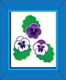 Three pansies in a Blue Frame Royalty Free Stock Photo