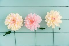 Three paper dahlias. Three crepe paper dahlias on turquoise wooden background Royalty Free Stock Images