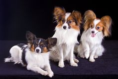 Three papillons Royalty Free Stock Photo