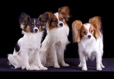 Three papillons Stock Photo