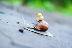Three park snails Stock Photos