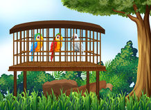 Three parrot birds in wooden cage Stock Images
