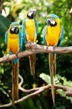 Three parrot in green rainforest.