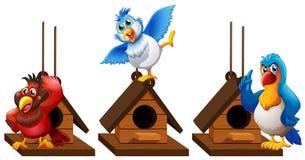 Three parrot macaw birds in birdhouse Stock Photos