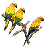 Three parrots Stock Photo