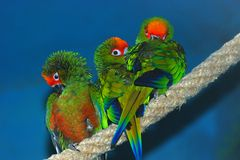 Free Three Parrots Royalty Free Stock Photos - 7512258