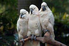 Tree parrots Stock Photo