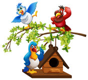 Three parrots flying around birdhouse Stock Images