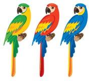 Three parrots macaws Royalty Free Stock Photos