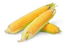 Three partially peeled corn cob lying cross Royalty Free Stock Photography