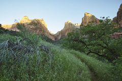 Three Patriarchs in Zion Canyon Royalty Free Stock Image