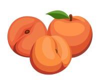 Three peaches. Royalty Free Stock Photos