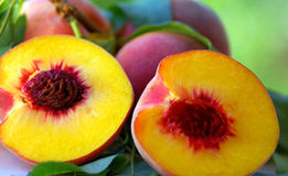 Three peaches. Royalty Free Stock Photos