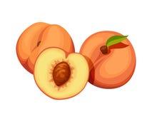 Three peaches. Vector illustration. Stock Photography
