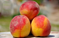 Three peaches. On wooden table royalty free stock photos