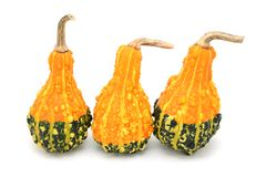 Three pear-shaped orange and green ornamental gourds Stock Images