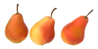 Three pears Royalty Free Stock Image
