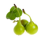 Three pears with leaves separately Stock Photography