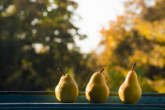 Three pears at the window Stock Images