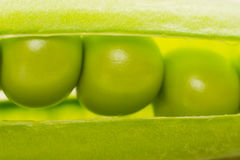 Three Peas in a Pod Royalty Free Stock Photo