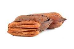 Three pecan nuts Stock Photography