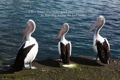 Three pelicans with a positive saying. That says a best friend shares the good times and help you out by listening during the bad times stock photo