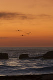 Three pelicans in sunset Royalty Free Stock Image