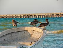 Pelicans taking a rest in a boat at Progreso beach, Yucatan, Mexico Royalty Free Stock Photography