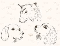 Three pencil sketches of dogs. Pencil sketch of three dogs. There are Spaniel, collie, Beagle is. Realistic sketch. There is a background with bones and collars royalty free illustration