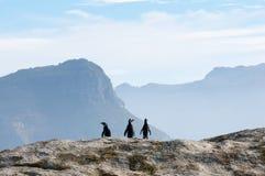 Three Penguins Stock Photo