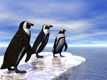 Three Penguins Stock Photo