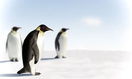 Three penguins in Antarctica royalty free stock image