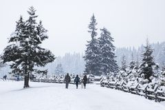 Three people and dog walking on snowy winter road in fog, pine f stock photos
