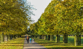 Three people walking along an avenue of lime trees Stock Image